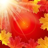 Shiny Autumn Natural Leaves Background. Vector Illustration. EPS10 royalty free illustration