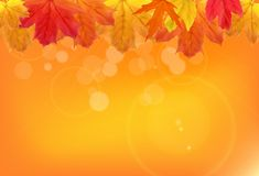 Shiny Autumn Natural Leaves Background. Vector Illustration Royalty Free Stock Images