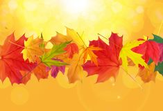 Shiny Autumn Natural Leaves Background. Vector Illustration Royalty Free Stock Photography