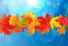 Shiny Autumn Natural Leaves Background. Vector Illustration Stock Photo