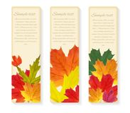 Shiny Autumn Natural Leaves Background. Vector Illustration Royalty Free Stock Photos