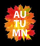 Shiny Autumn Natural Leaves Background. Vector Illustration Stock Photos