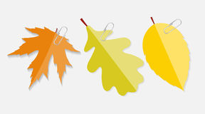 Shiny Autumn Natural Leaves Label with Clip Vector Stock Photography