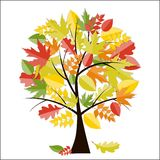 Shiny Autumn Natural Tree Background. Vector Royalty Free Stock Images