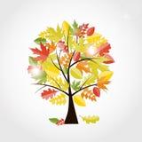 Shiny Autumn Natural Tree Background. Vector Royalty Free Stock Photography