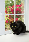 Shiny black cat in front of a window Royalty Free Stock Photos