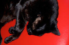 Shiny black cat on red vinyl from above. Looking down on a shiny black cat sleeping on bright red vinyl surface Stock Images