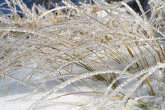 Shiny Blades of Grass in Frost. Ice covered glittering on the sun straws. Late autumn, first snow in the mountain Stock Photos