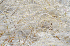 Shiny Blades of Grass in Frost. Ice covered glittering on the sun straws. Late autumn, first snow in the mountain Stock Images