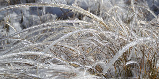 Shiny Blades of Grass in Frost. Ice covered glittering on the sun straws. Late autumn, first snow in the mountain Royalty Free Stock Photo