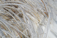 Shiny Blades of Grass in Frost. Ice covered glittering on the sun straws. Late autumn, first snow in the mountain Stock Image