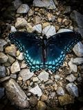 Shiny blue butterfly