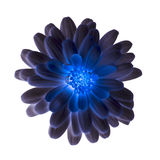 Shiny blue flower on a white background Royalty Free Stock Photography