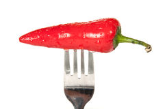 A shiny bright red chili Royalty Free Stock Photography
