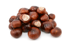 Shiny brown conkers Stock Images