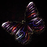 Shiny butterfly Royalty Free Stock Photo