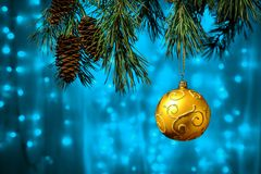 Shiny Christmas gold ball hanging on pine branches with festive blue background Royalty Free Stock Photography