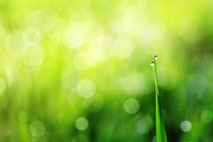 Shiny clear dew drops on green grass early on a Sunny morning. Clear dew drops on green grass early on a Sunny morning Royalty Free Stock Photography