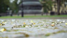 Shiny confetti scattered on the stone paving. In a historic place as called Novgorodskiy Kremlin, Velikiy Novgorod, Russia stock video