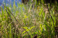 Shiny dew on spiderweb Stock Images