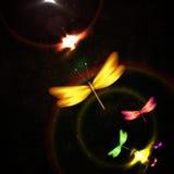 Shiny dragonfly Stock Photography