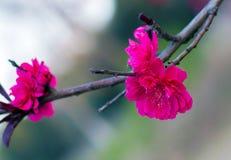Shiny flower Royalty Free Stock Photography