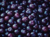 Shiny fresh black sweet cherries pattern Stock Image