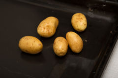 Shiny fresh potatoes on an oven plate Stock Images