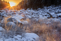 Shiny frozen grass Stock Images