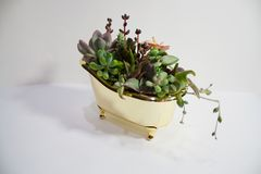 Shiny gold bath full with various succulents stock photo
