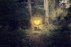 Shiny halloween pumpkin Royalty Free Stock Images