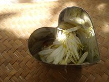 Shiny heart full if falling white petals. See through heart on bamboo weaven mat royalty free stock photo