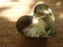 Shiny heart full if falling white petals Royalty Free Stock Photo