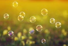 Shiny iridescent soap bubbles flying over the Sunny meadow Royalty Free Stock Photo
