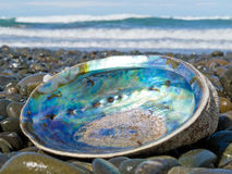 Shiny nacre of Paua shell, Abalone, washed ashore Stock Images