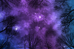 Shiny nebula on starry night sky, low angle view trough trees Stock Images