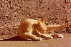 Cat yoga royalty free stock image