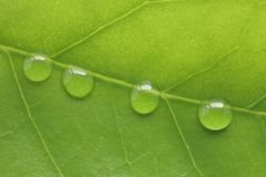 Shiny rain drops or transparent water droplet on green leaf macro background Stock Photos