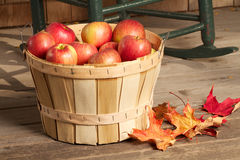 Shiny red apples fill a bushel basket. Which sits on a rustic wooden porch. Background of cedar shingles and cropped antique rocking chair. Horizontal format Stock Images