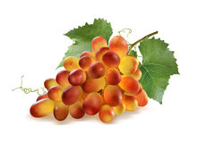 Shiny red grapes bunch and leaves on white. Background as package design element stock photos