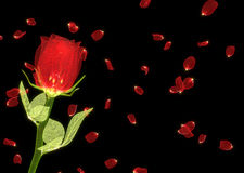Shiny red rose and petals on black background Royalty Free Stock Photos