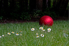 Shiny Red Soccer Ball With Daisies. A shiny red soccer ball sits in a field in front of a forest with white daisies in the foreground stock images