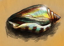 Shiny sea shell sketch Stock Image