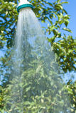 Shiny shower. On green leaves background Stock Images