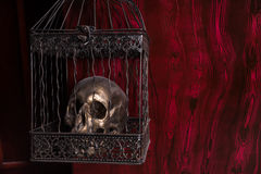 Shiny Skull in Ornate Cage Against Red Background Stock Image