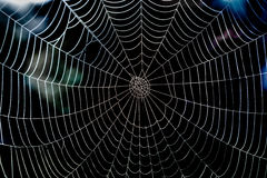 Shiny spider web with morning dew and dark background. Royalty Free Stock Photos
