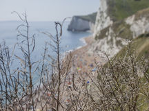Shiny straws and the white cliffs, Durdle Door. The picture shows some shiny straws the edge of a cliff and blue waters of the sea in Durdle Door, Dorset Stock Photography