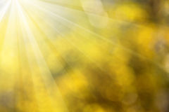 Shiny sunbeams abstract summer background Stock Image