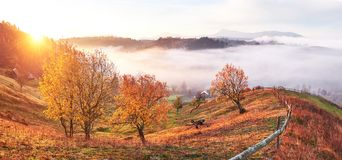 Shiny tree on a hill slope with sunny beams at mountain valley covered with fog. Gorgeous morning scene. Red and yellow royalty free stock photography