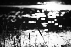 Shiny water and bulrush Stock Photos